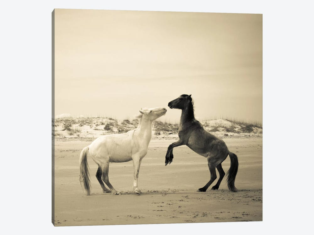 Wild Horses IV by Olivia Joy StClaire 1-piece Canvas Art Print