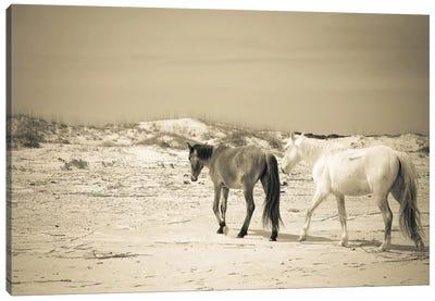 Wild Horses VI Canvas Art Print