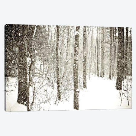 Wintry Mix Canvas Print #OJS89} by Olivia Joy StClaire Canvas Art Print