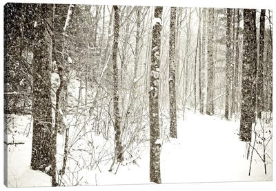 Wintry Mix Canvas Art Print