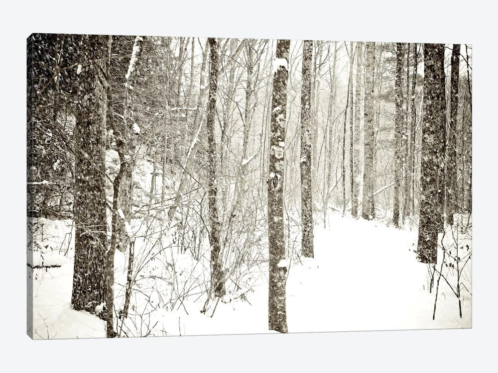 Wintry Mix 1-piece Canvas Art Print