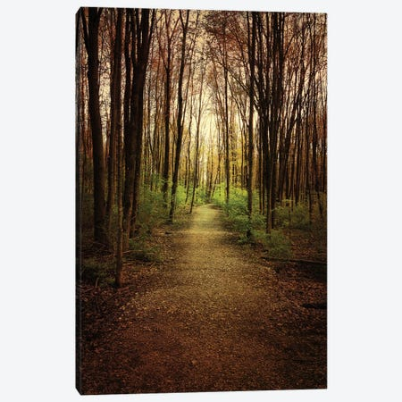 Woodland Wander Canvas Print #OJS90} by Olivia Joy StClaire Canvas Wall Art