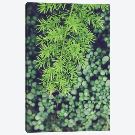 As Is Canvas Print #OJS93} by Olivia Joy StClaire Canvas Wall Art