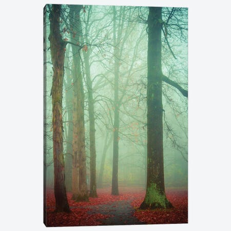 Autumn Fog Canvas Print #OJS95} by Olivia Joy StClaire Art Print