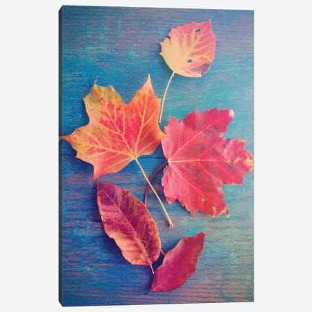 Autumn Leaf Still Life Canvas Print #OJS97} by Olivia Joy StClaire Canvas Art Print