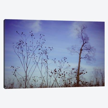 Autumn Twilight Canvas Print #OJS99} by Olivia Joy StClaire Canvas Artwork