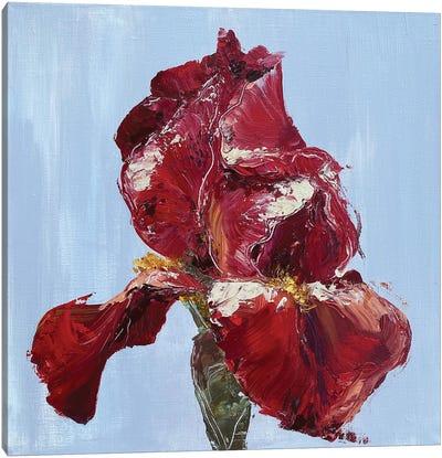Red Iris Canvas Art Print