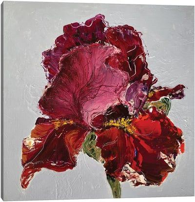 Iris On Grey Canvas Art Print