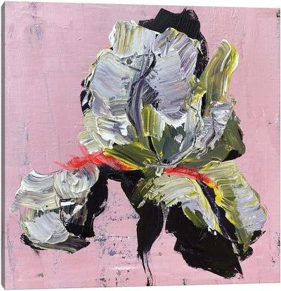 Iris On Pink Canvas Art Print