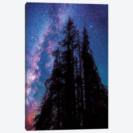 Under the Stars II Canvas Print #OLE107} by OLena Art Canvas Print
