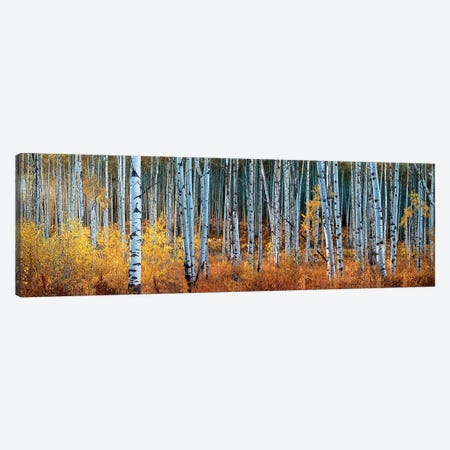 Colorado Autumn Wonder Panorama Canvas Print #OLE111} by OLena Art Art Print