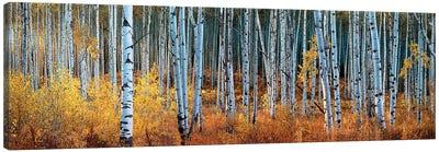Colorado Autumn Wonder Panorama Canvas Art Print
