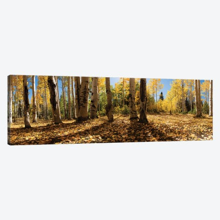 Crested Butte Colorado Fall Colors I Canvas Print #OLE123} by OLena Art Canvas Art