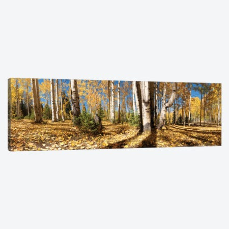 Crested Butte Colorado Fall Colors II Canvas Print #OLE124} by OLena Art Canvas Print