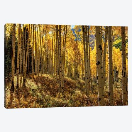 Autumn Aspen Forest Colorado USA  Canvas Print #OLE134} by OLena Art Canvas Art