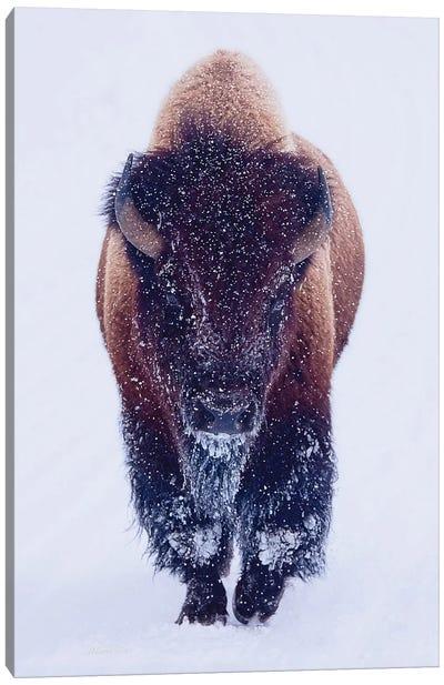 Bison In Snow Canvas Art Print