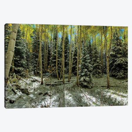Colorado Autumn Snow Storm Canvas Print #OLE148} by OLena Art Canvas Art