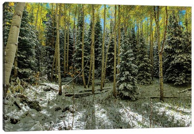 Colorado Autumn Snow Storm Canvas Art Print