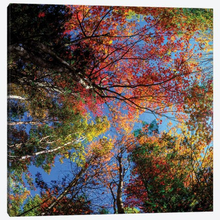 Colorful Autumn New Hampshire Canvas Print #OLE160} by OLena Art Canvas Wall Art