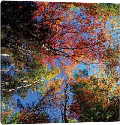 Colorful Autumn New Hampshire Canvas Art Print