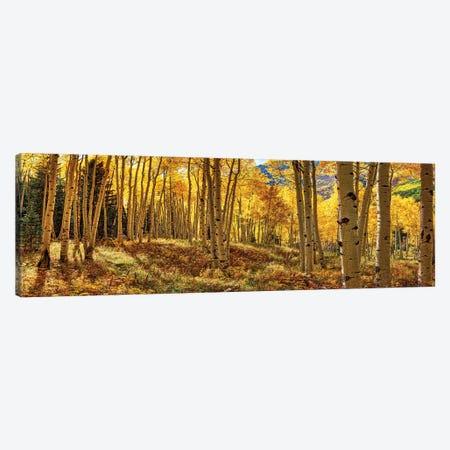 Autumn Aspen Colorado Forest Panorama 3-Piece Canvas #OLE207} by OLena Art Canvas Artwork