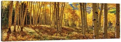 Autumn Aspen Colorado Forest Panorama Canvas Art Print