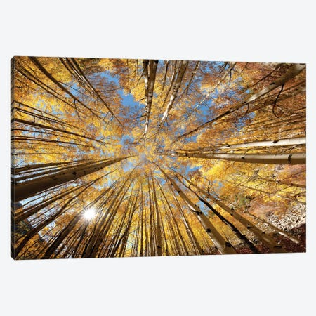 Colorado Autumn  Splendor Canvas Print #OLE214} by OLena Art Canvas Print