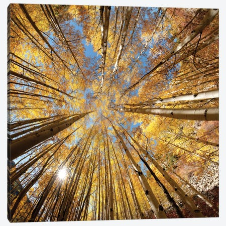 Autumn Splendor Canvas Print #OLE215} by OLena Art Canvas Print