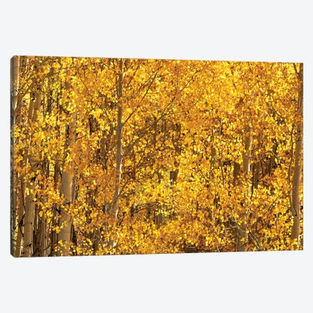 Season Of Gold III Canvas Print #OLE216} by OLena Art Canvas Print