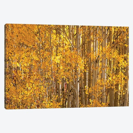 Season Of Gold II Canvas Print #OLE217} by OLena Art Canvas Art Print
