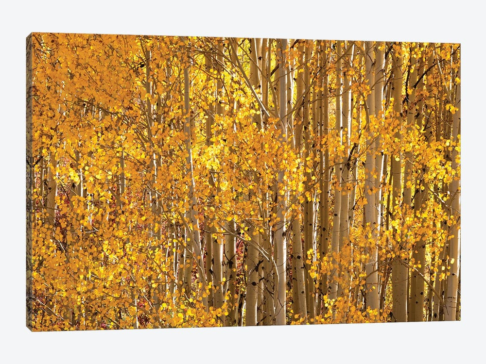 Season Of Gold II by OLena Art 1-piece Canvas Wall Art