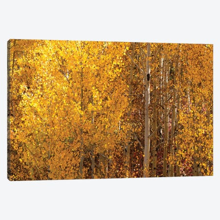 Season Of Gold I Canvas Print #OLE218} by OLena Art Canvas Wall Art