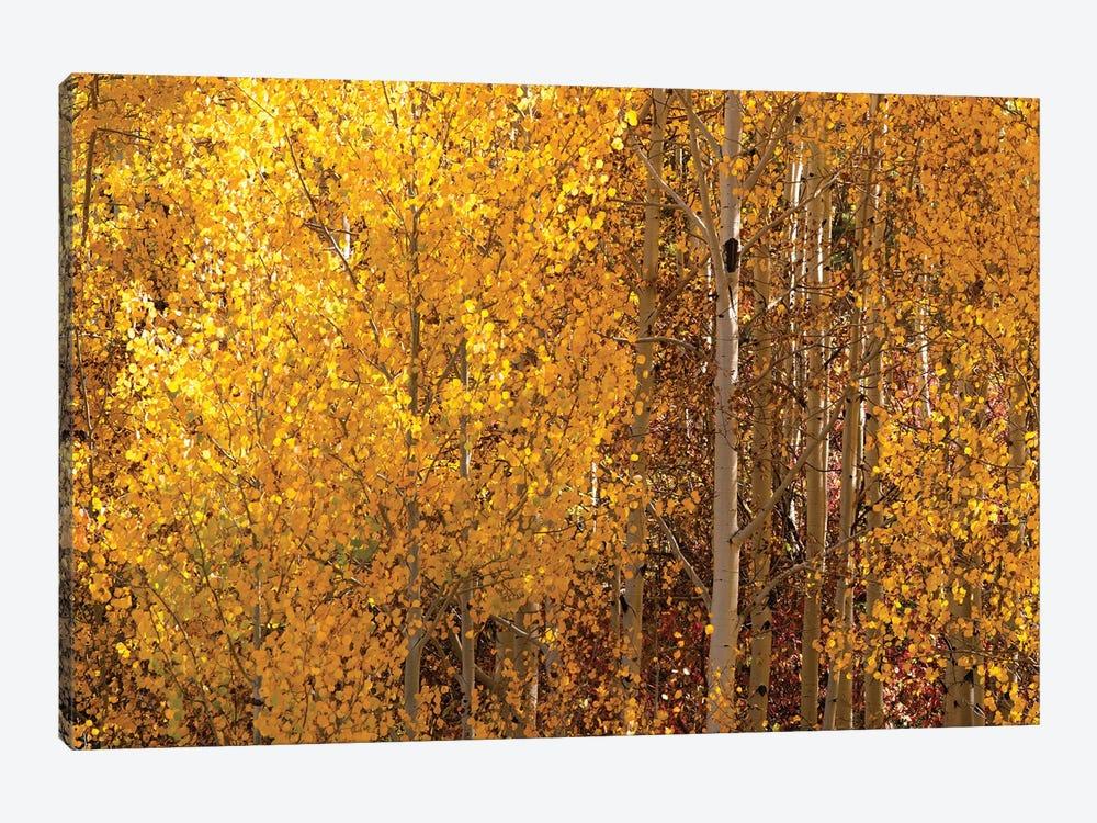 Season Of Gold I by OLena Art 1-piece Canvas Art Print