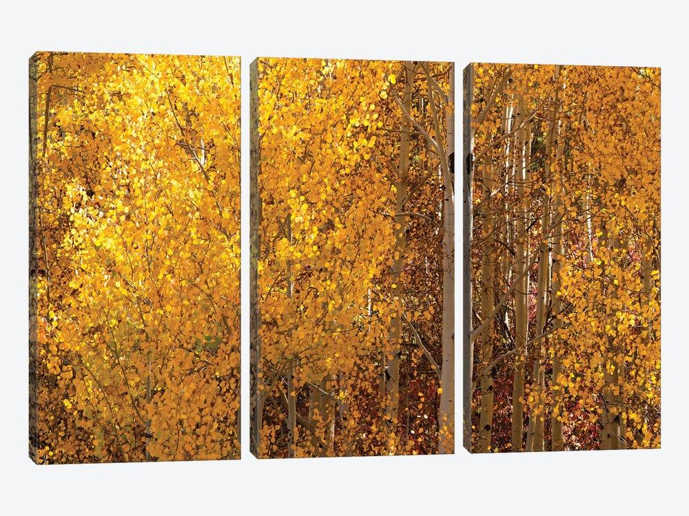 Season Of Gold I by OLena Art 3-piece Art Print