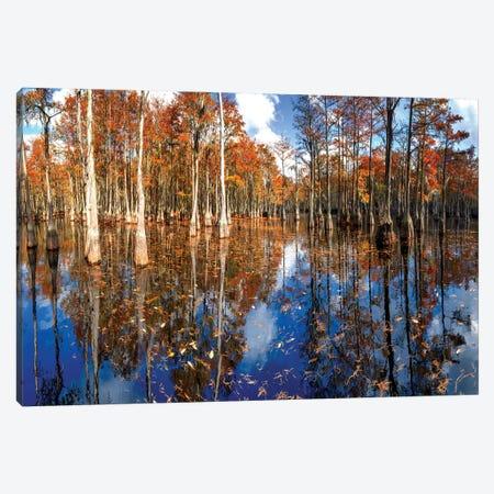 Cypress Swamp George L. Smith State Park, Georgia Canvas Print #OLE225} by OLena Art Canvas Artwork
