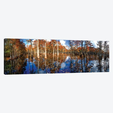 Cypress Swamp Panorama In George L. Smith State Park, Georgia Canvas Print #OLE226} by OLena Art Canvas Wall Art