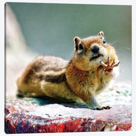 Talk To The Hand - Chipmunk Art Canvas Print #OLE232} by OLena Art Canvas Wall Art