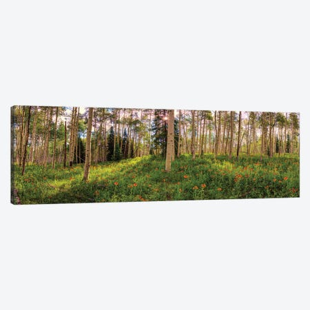 Crested Butte Colorado Spring Aspens Canvas Print #OLE237} by OLena Art Canvas Art Print