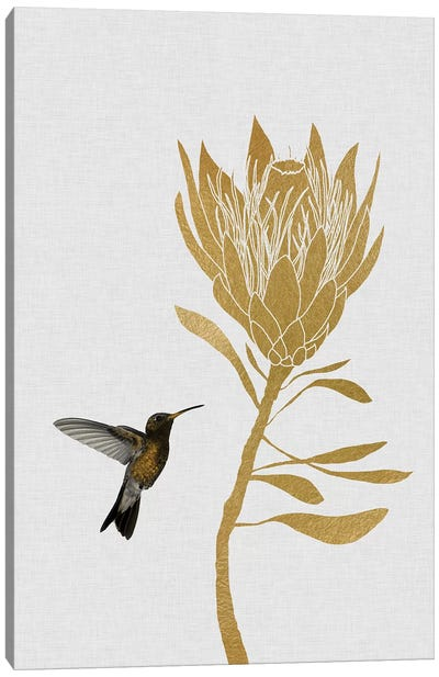 Hummingbird & Flower II Canvas Art Print