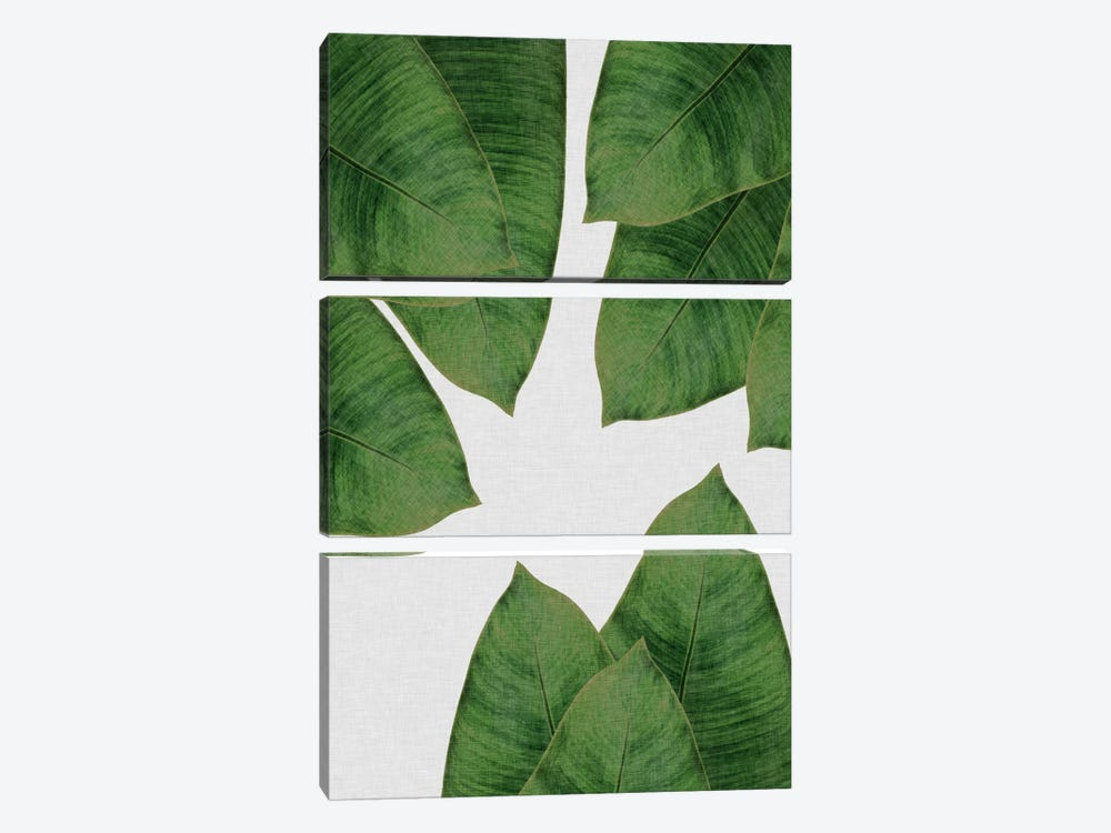 Banana Leaf I by Orara Studio 3-piece Canvas Art