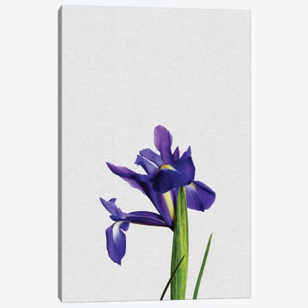 Iris Canvas Print #ORA117} by Orara Studio Canvas Wall Art