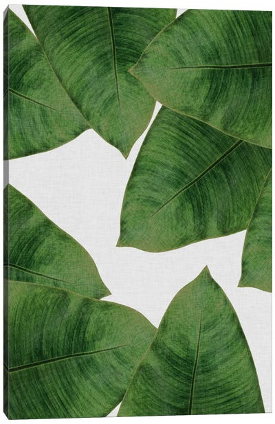 Banana Leaf II Canvas Art Print
