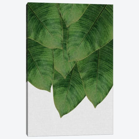 Banana Leaf III Canvas Print #ORA13} by Orara Studio Canvas Art