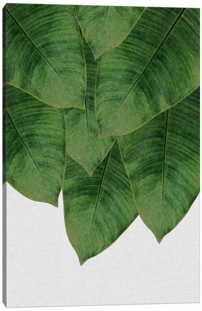 Banana Leaf III Canvas Art Print
