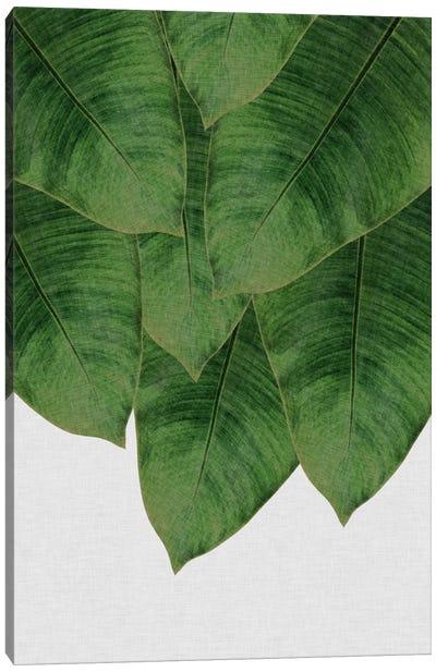 Banana Leaf III Canvas Art Print