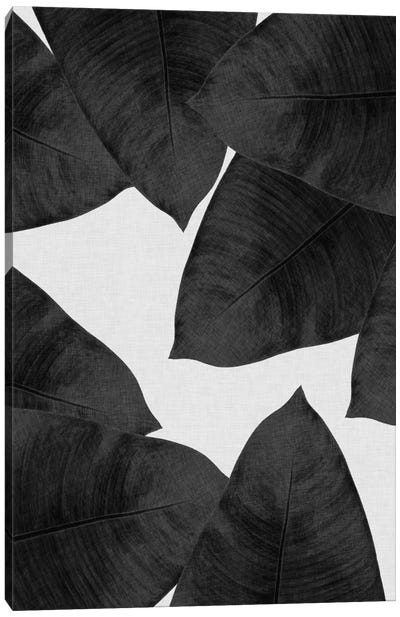 Banana Leaf II B&W Canvas Art Print