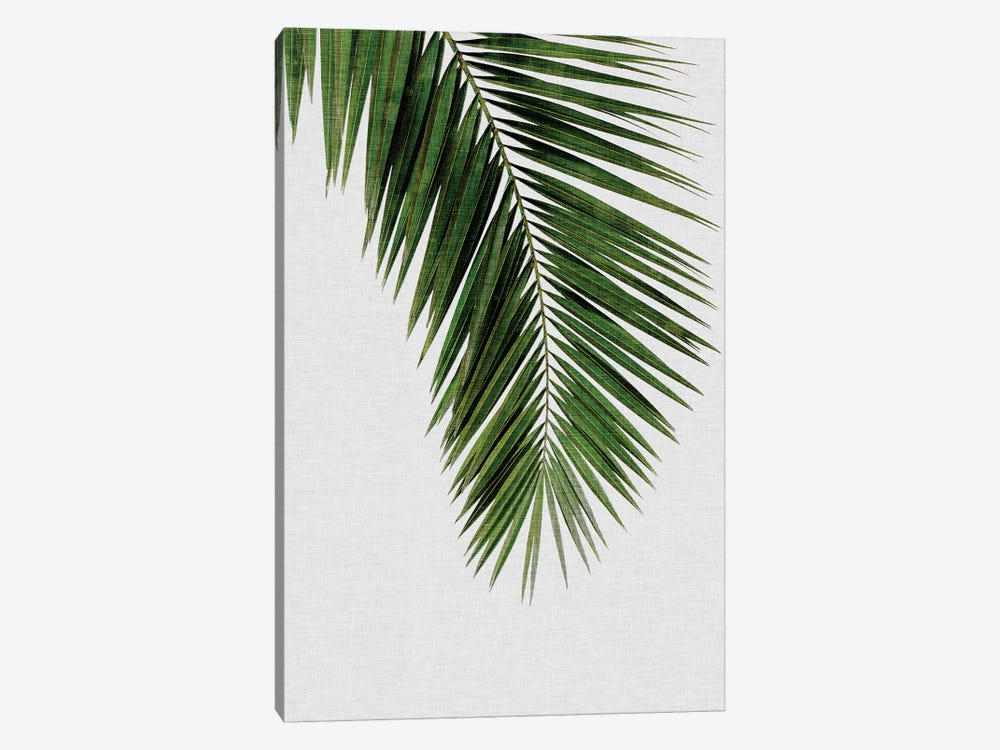Palm Leaf I by Orara Studio 1-piece Canvas Art