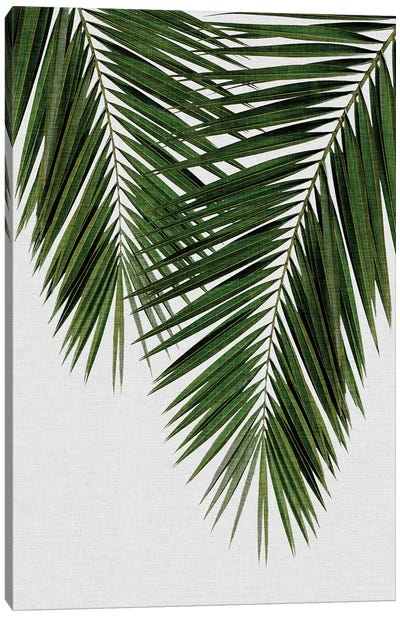 Palm Leaf II Canvas Art Print