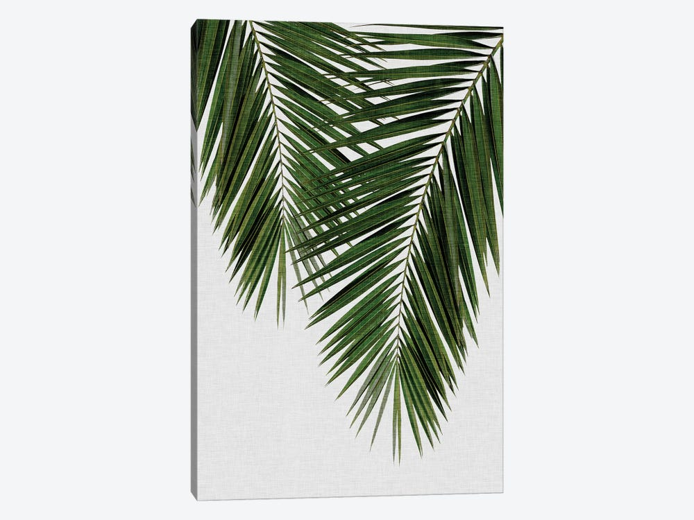 Palm Leaf II by Orara Studio 1-piece Canvas Print