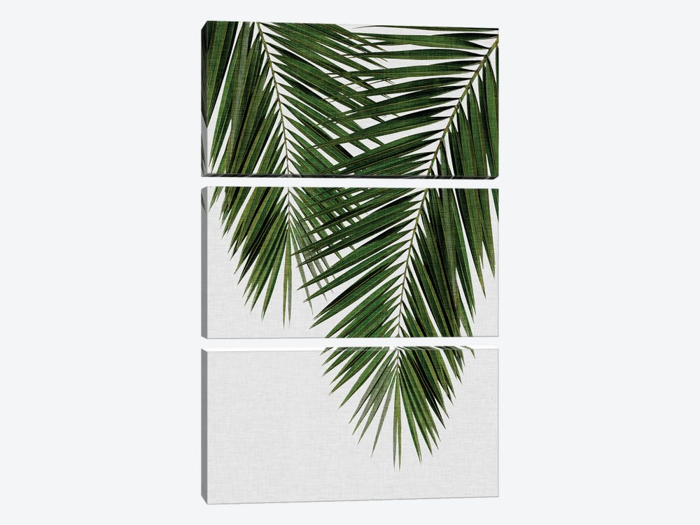 Palm Leaf II by Orara Studio 3-piece Canvas Print